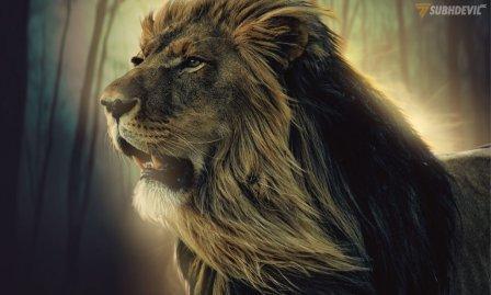 6 Pelajaran Yang Dapat Kita Pelajari dari The King of the Jungle