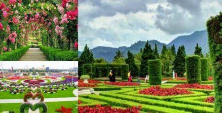 Catat Rute Menuju Lokasi Taman Bunga Begonia, Manjakan Mata