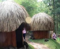 Wisata Goa Pinus