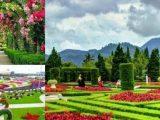 Catat Rute Menuju Lokasi Taman Bunga Begonia