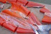 Manfaat Ikan Salmon Untuk Bayi Dan Anak